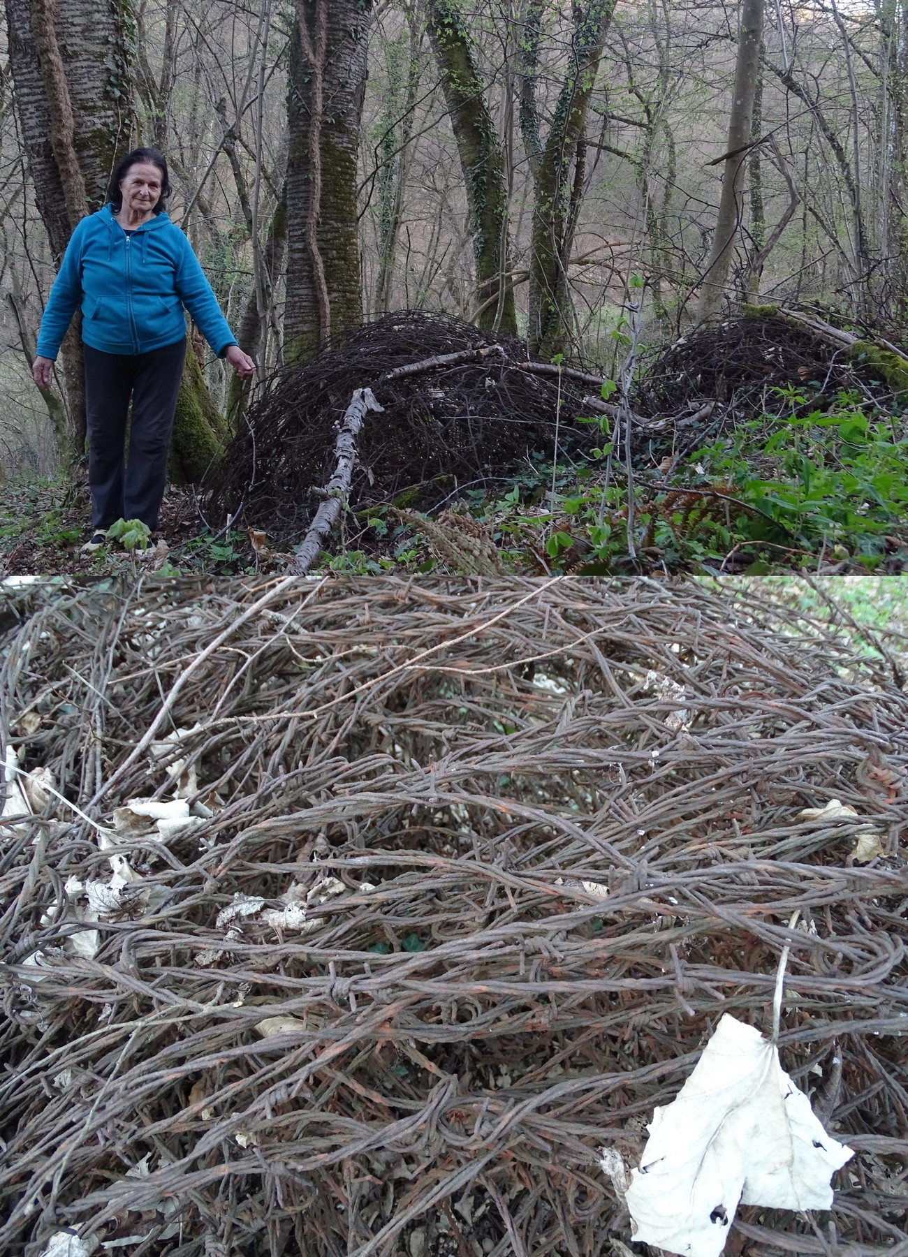Albina Volčjak (born 1942) next to the remains of barbed wire near Dolenji Suhadol, where a fortified border ran across a deforested zone. Author: Blaž Štangelj.