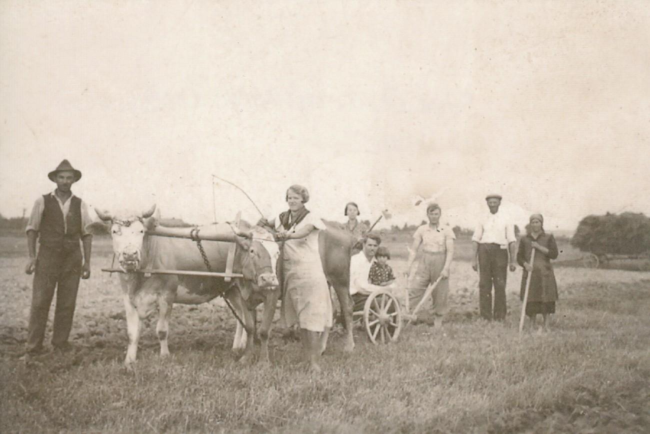 Kolonisti iz Kamovcev med oranjem zemlje leta 1940. Fotografijo hrani Jože Vidič, Lendava.